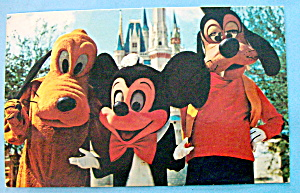 Magic Kingdom Postcard