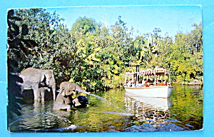 Elephant Bathing Pool Postcard