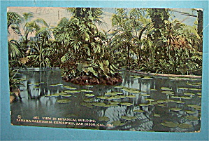 View In Botanical Building Postcard-pan California Expo