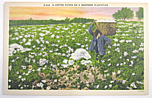 Cotton Picker On Southern Plantation Postcard