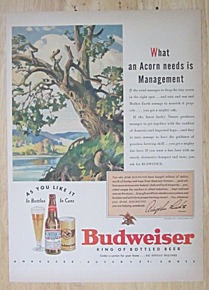 1937 Budweiser Beer With A Tree Losing Leaves