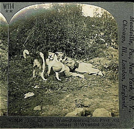 Stereoview - Wwi - French Red Cross Dog.