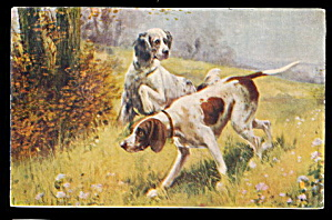 1907 Spaniel Setters Hunting Dogs Postcard