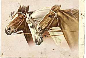 Great 3 Horses (Heads) Vintage Postcard