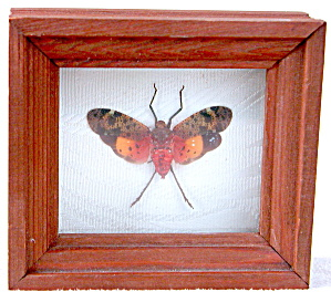 Framed Lantern Flies