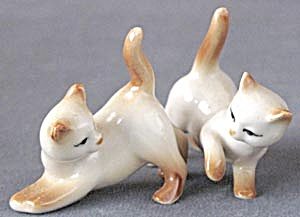 Siamese Cats Playing
