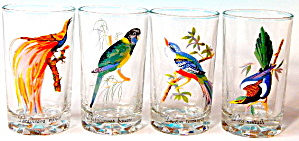 Vintage Tropical Bird Drinking Glasses Set Of 4