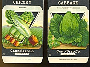 Vintage Vegetable Seed Packetschicory & Cabbage