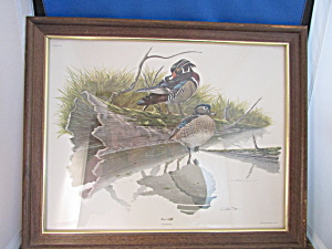 Wood Duck Print From Richard Sloan