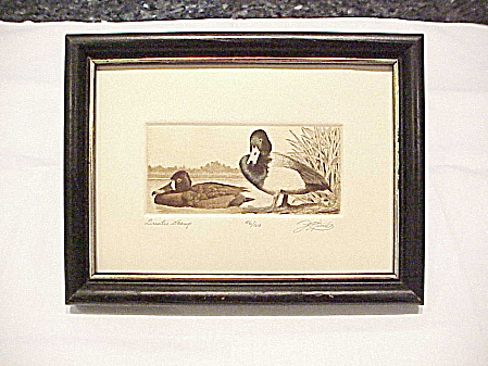 David Hunter Greater Scamp Duck Etching Picture