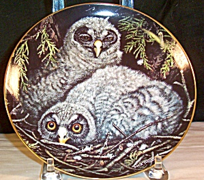 Great Grey Owls By Dick Twinney,baby Owls Collection
