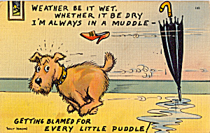 Weather It Be Wet, Wether It Be Dry Postcard P25656
