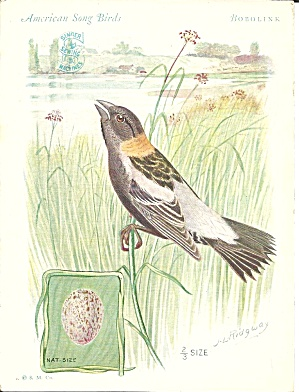 Singer Sewing Machines Bobolink Trade Card Tc0238